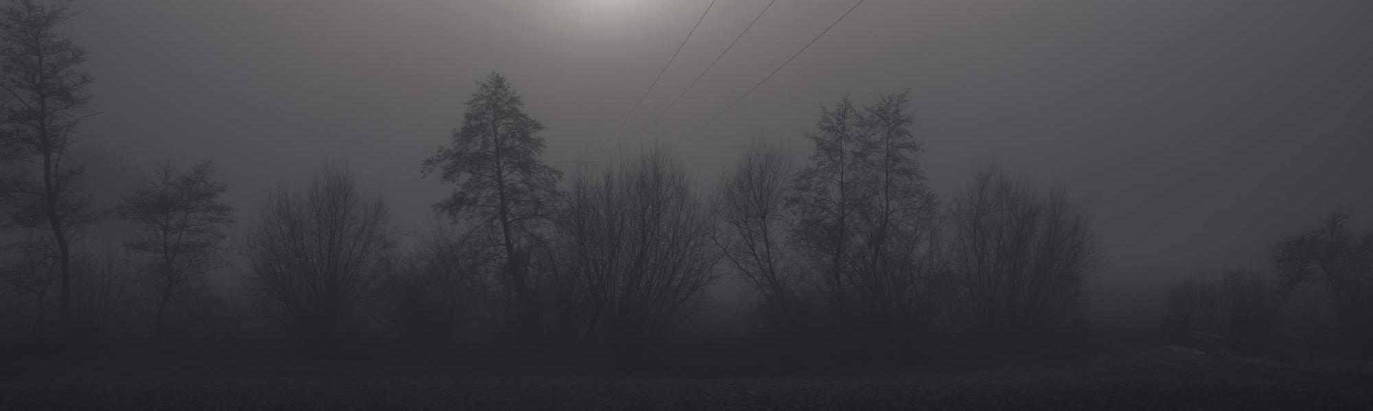 Baumreihe im dichten Nebel